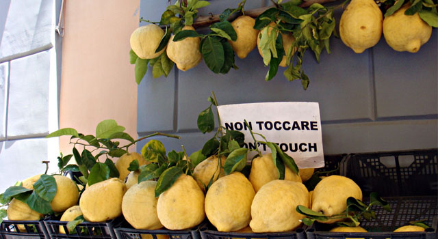 Original lemon of Sorrento